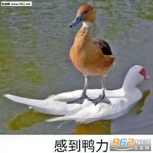 感到鸭力表情包图片图片