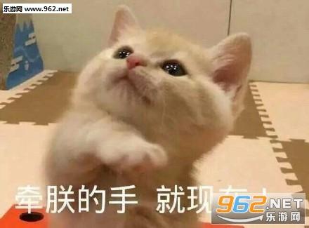 牵朕的手就现在图片猫咪表情搞笑图片关于的感动很图片