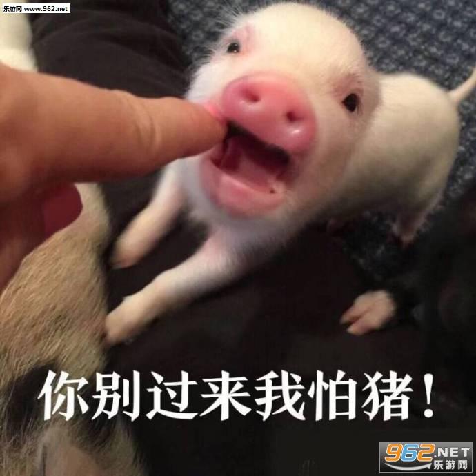 你别过来我怕猪表情包图片图片