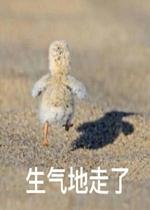 表情生气转身的走了小鸟的表情包配音自己|牵朕的手就现在猫图片