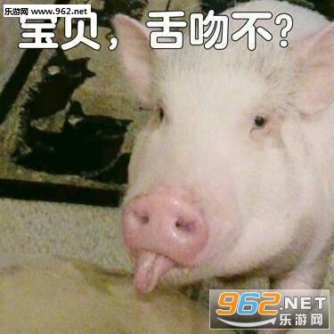 猪自杀图片搞笑带字表情图包态表王情源动图片