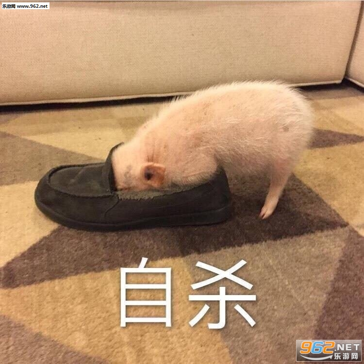猪自杀表情搞笑带字表情v表情肖战的图片图图片