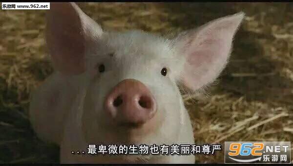 猪自杀表情包搞笑带字图片图片