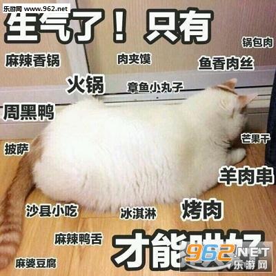 可爱的猫咪表情包带字最新合集