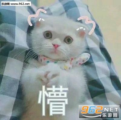 《敲可爱猫咪qq表情包》是一套使用激萌的喵咪外表来对你口吐恶语的