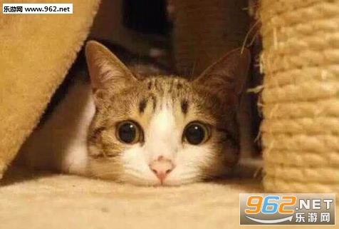 壁纸 动物 猫 猫咪 小猫 桌面 476_321图片