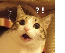 表情猫动态熊猫表情包嘻嘻嘻带字瓜皮+静图合集|表情猫瓜皮图片