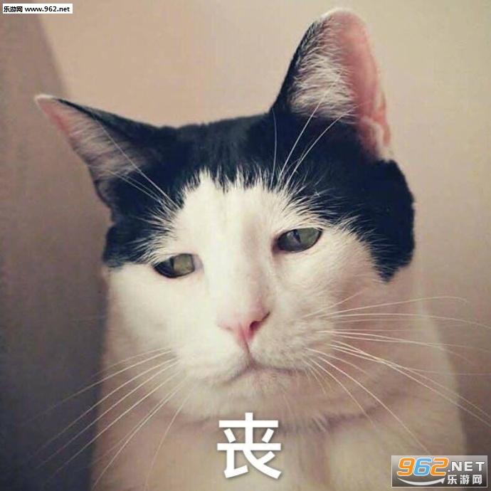你别是个表情吧猫咪傻子孩包表子夸女情图片