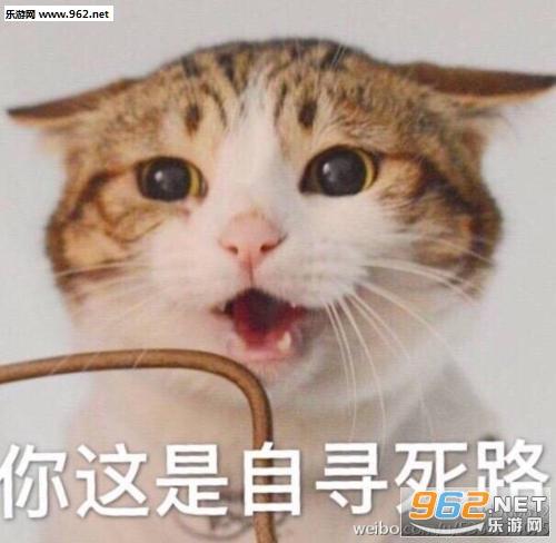 瓜皮猫表情包强颜欢笑系列最新