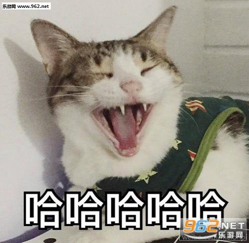 表情猫动态西游降魔篇表情动态带字瓜皮+静图合集|表情猫瓜皮图片