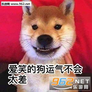 单身狗专属表情包图片
