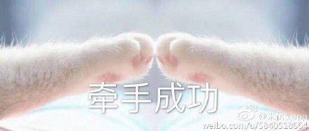 猫爪牵手表情包全套图片