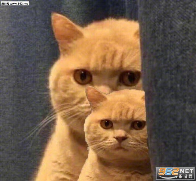 你已经被橘猫锁定搞笑图片|你已经被橘猫锁定表情可爱谢不用包qq图片
