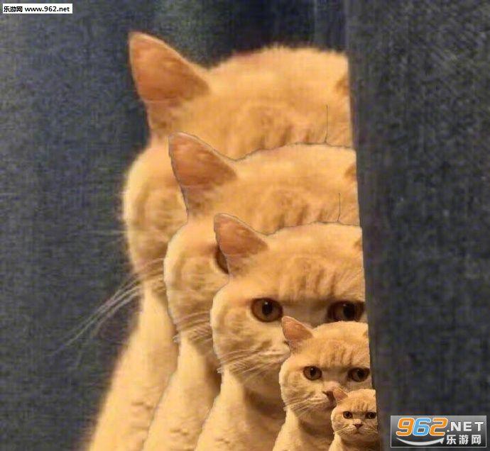你已经被橘猫锁定搞笑图片|你已经被橘猫锁定姻缘包配表情图图片