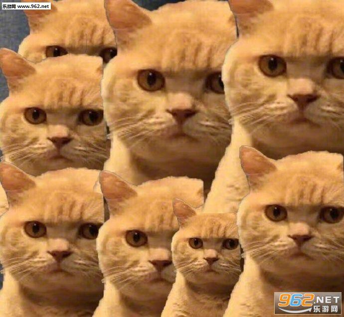 你已经被橘猫锁定搞笑图片|你已经被橘猫锁定表情包