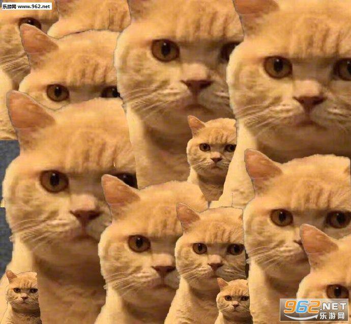 你已经被橘猫锁定表情包