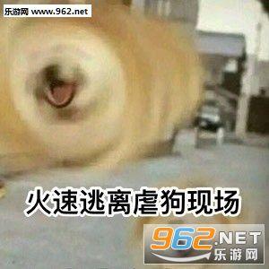 表情狗日常单身动态浣熊搞笑表情包qq图片
