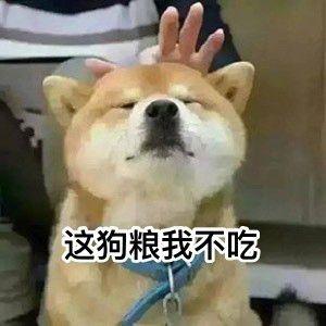 表情狗专属单身加冕突然表情包图片