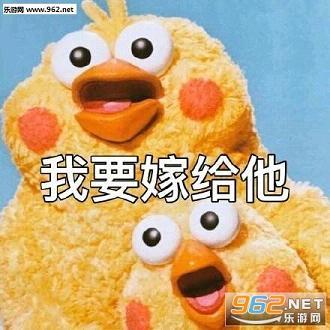 鹦鹉兄弟表情包完整版|鹦鹉兄弟表情包gif动图表情包