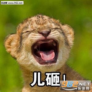 儿砸表情包是一套搞笑的聊天表情,以熊猫,斑马,狮子等各种不同的动物
