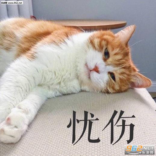 猫咪无水印可爱图片