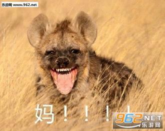 喊妈小动物系列表情我这个了不读书表情包图片
