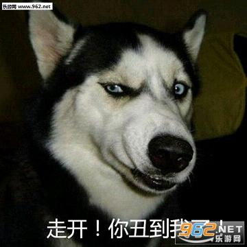 很好笑吗一天到晚就知道哈哈哈表情包图片