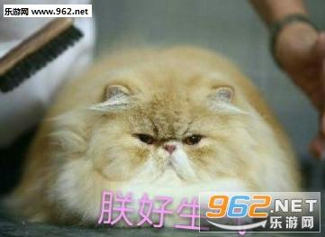 朕好生气喵表情|人民的猫奴表情下载-乐游男孩子可爱表情包是一定那么图片