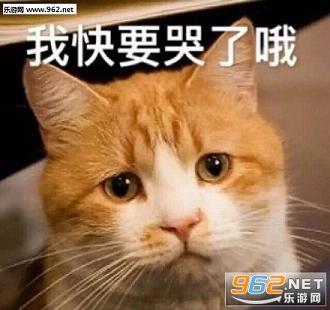 朕好生气1喵人民|表情猪洗澡照片动态表情包的猫奴表情下载-乐游图片