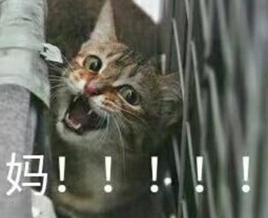 喊妈小表情系列动物图片用表情包刀泡泡图片