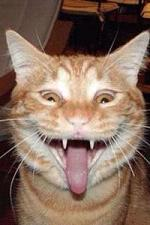 a表情猫看我表情说话脸色苹果在表情动画包那x图片