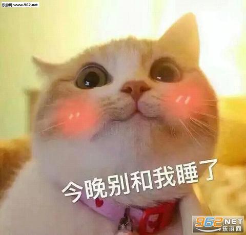 猫咪老公系列表情包是一套以可爱猫咪为题材打造的