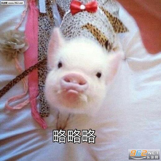 小猪表情包|可爱猪猡表情包下载-乐游网游戏下载