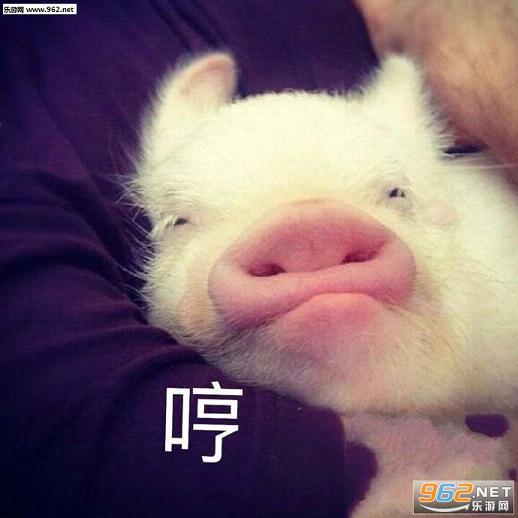 可爱猪猡表情包图片