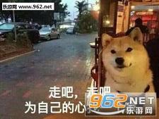 我等的狗他在多远的未来表情狗表情|一个狗v表情前的单身包图片