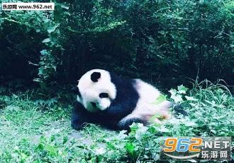 我觉得我很委屈熊猫表情包|欢乐颂小蚯蚓邱被打生闷气