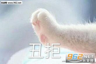 牵手表的手猫爪系列图|牵表情的宝宝情下载宝宝包湖南搞笑图片