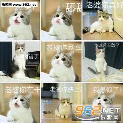 可爱喵星人表情系列表情老婆包士奇哈v表情图片