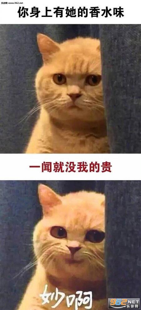 你做你的单身狗我有一个女朋友秒啊猫咪表情包图片