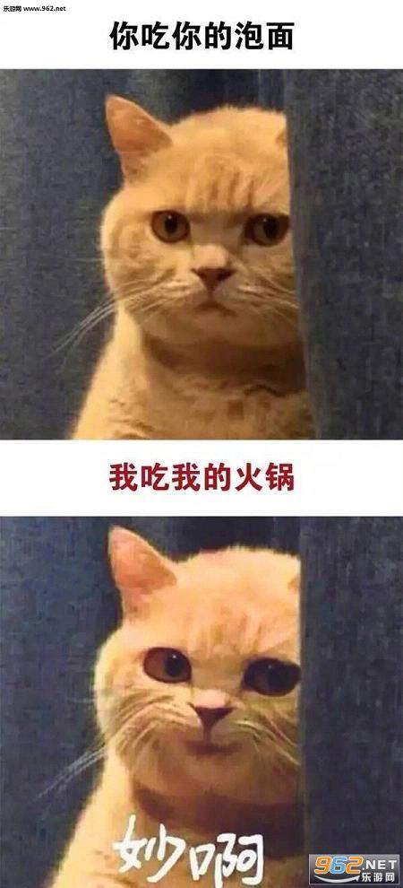 你做你的单身狗我有一个女朋友秒啊猫咪表情包_截图2