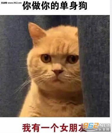 是一组非常有趣的猫咪表情包,就是那只颜色窥视的黄胖猫,被p成笑脸图片