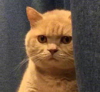 猫咪暗中观察表情包|暗中观察猫表情包下载无水印-乐