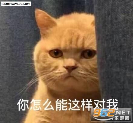 暗中委屈橘猫表情包图片