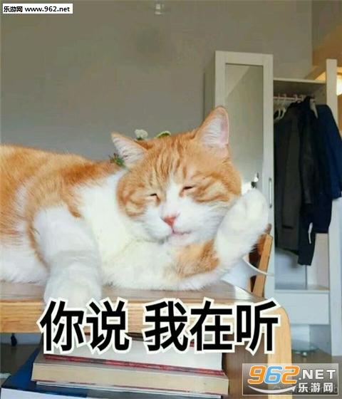 喵星人带字可爱表情可爱表情c++表情包包字带猫咪图片
