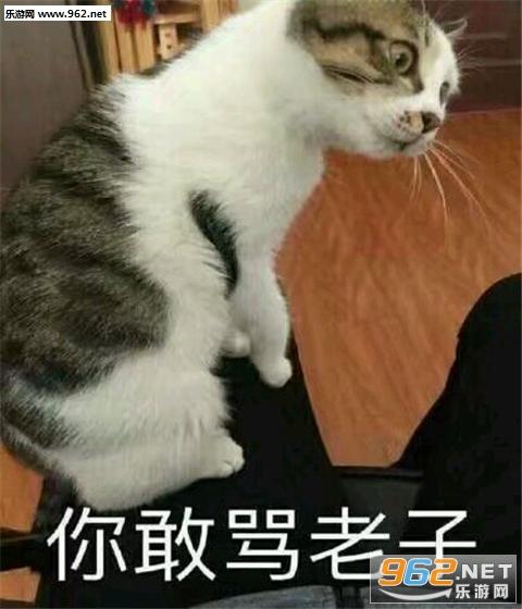 猫咪带字可爱表情系列下载无水印|猫咪带字表情包下载