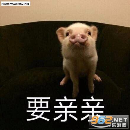 最近流行的吸猪表情包无水印