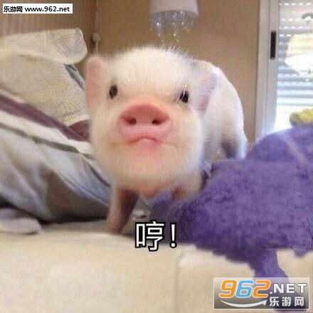 最近流行的吸猪表情包丘信微龙比表情图片