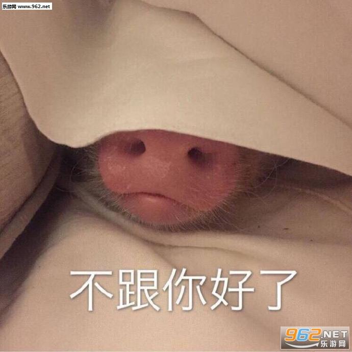 这是哪个小可爱啊吸猪自恋表情包 笑出猪声吸猪表情包