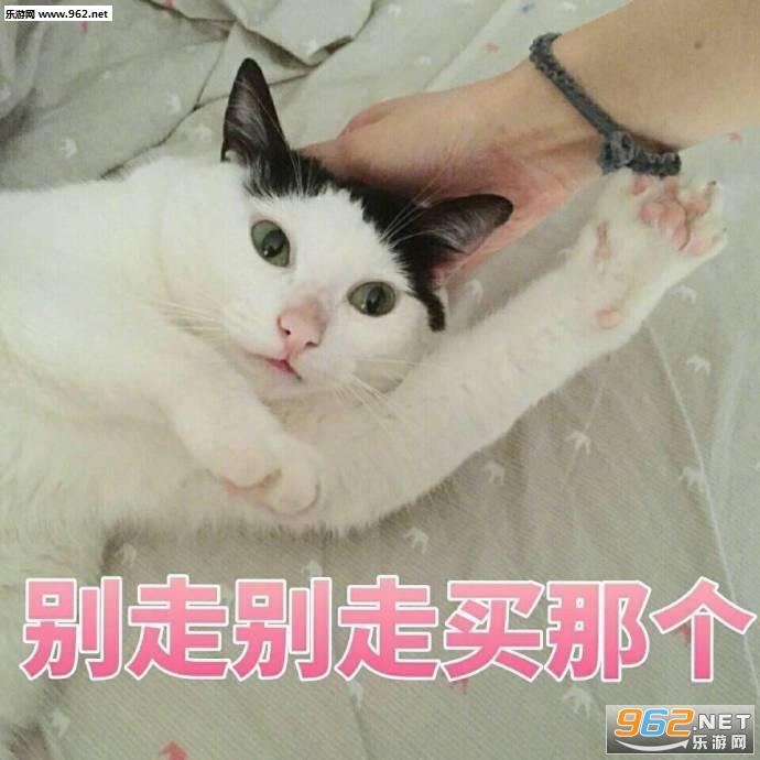 猫咪这个你给我买这个表情我要真tmd难吃的表情包