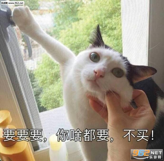 我要这个你给我买这个猫咪表情包图片